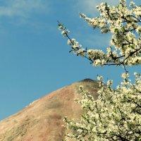 весна пришла :: алексей сергиенко