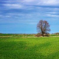Одиноко стоящий :: Tatsiana Latushko