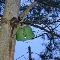 Чайник в лесу :: Мария Коледа
