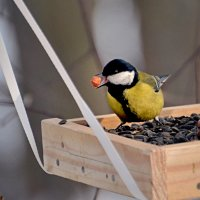 с орешком на качелях) :: linnud