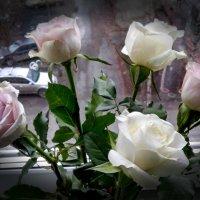 Розы... и дождь за окном :: Елена Байдакова