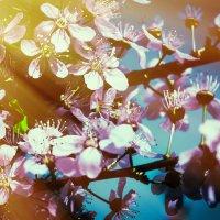 Моя весна :: Ольга Назаренко
