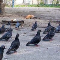 охота на голубей :: Оксана Лаврентьева