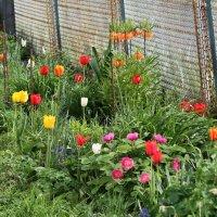 Весна в саду!!! :: Светлана Масленникова