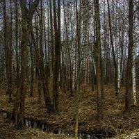В лесу... :: Юрий