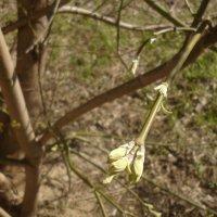 Весна на Ковалихе :: Mary Коллар