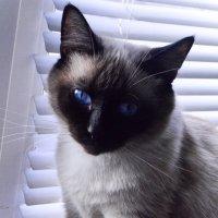 кот Коржик :: Инна - Lasso - Ленкевич