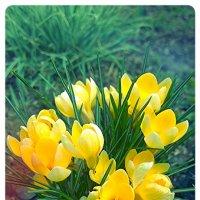 Весна :: Nata Цой