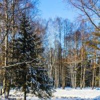 Зимнее волшебство :: Алёнка Шапран