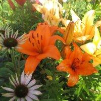 Ах, эти цветики - цветочки... :: Valentina