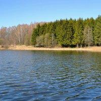Ельник у озера :: Милешкин Владимир Алексеевич