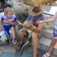 Знакомство с крокодилом :: Вера Щукина