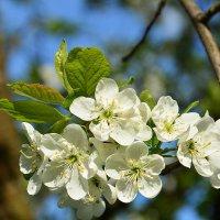 Всего один лишь только раз,цветут сады......... :: Paparazzi