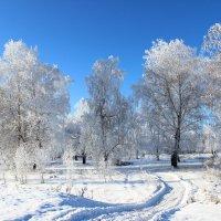 Мороз и солнце. День чудесный. :: галина