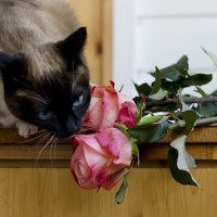 Как хороши и свежи эти розы... :: Ирина Климова
