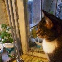 Я кошка,кошка, кошка, сижу гляжу в окошко :: Mary Коллар
