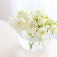 Розы :: Olga Al