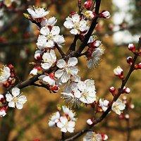 Природа расцветает :: Маргарита Батырева