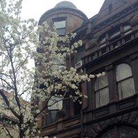 Весна в Нью-Йорке :: Елена