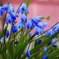 Весны голубые глаза :: Татьяна Ломтева