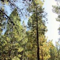 лес :: Герович Лилия