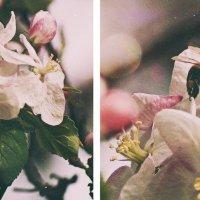 пчела Майя :: Оксана #