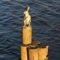 Зайчик у заячьего острова :: Вера Щукина
