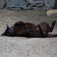 Степной кот :: Аркадий