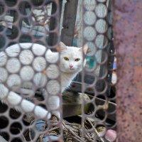 белый котик за забором :: Света Кондрашова