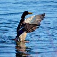 делайте так! :: linnud