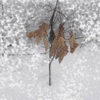 природа зимой :: Юлия Денискина