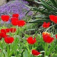 Палитра апреля... :: Тамара (st.tamara)
