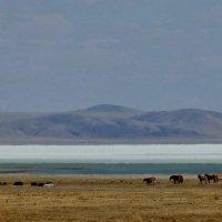 Озеро Зун-Торей, Забайкалье, апрель :: Анна