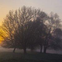 Солнце вышло из за леса :: Сергей Корнев