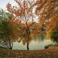 разноцвертная осень :: Марат Макс