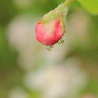 две капли дождя :: Хэлен ***