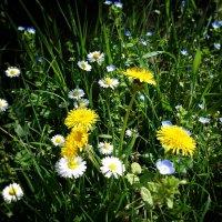 Весенние цветы... в них столько нежности, любви и красоты! :: Galina Dzubina