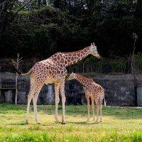 Нагоя зоопарк :: Swetlana V