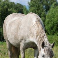 Лошадь :: Alex Bush