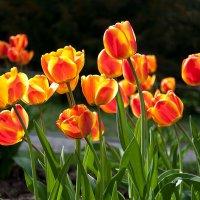 В каждом цветке солнце... :: Наталья Костенко