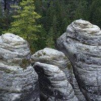 Скалистые горы заповедника Бастай в Германии :: Ирина Лепнёва