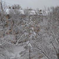 Эх зима :: Анатолий Евстегнеев