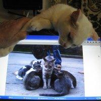 """Зависть к виртуальной жизни на """"ФотоКто""""... :: Алекс Аро Аро"""