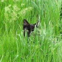 Пантера в засаде :: Александр Скамо