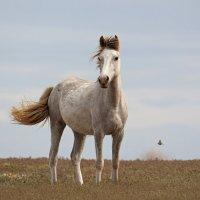 Лошадь.Слово неругательное. :: Вадим
