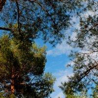 весеннее небо :: Аксана Еськина