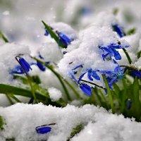 вот и пришла весна (зима) :: Сергей Розанов