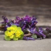 Первые цветы :: Юля Колосова