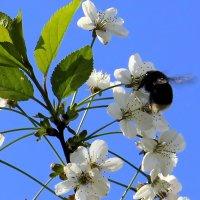Гудят в цветах и пчёлы, и шмели.... :: Валентина ツ ღ✿ღ