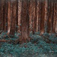 Сонное Утро в лесу! :: סּﮗRuslan HAIBIKE Sevastyanovסּﮗסּ